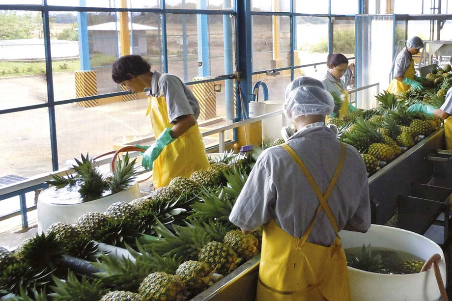 Ananas Gold Selection del Costa Rica