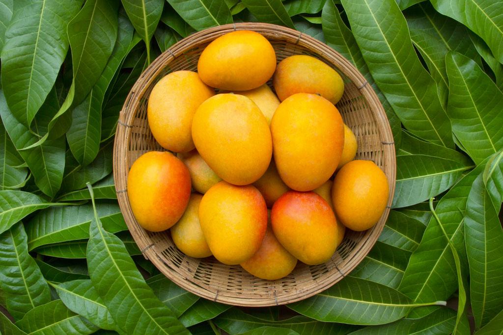 mango del brasile