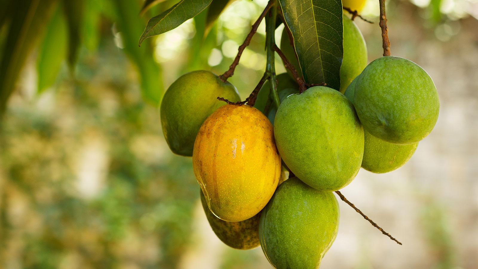 maturazione-frutta-esotica