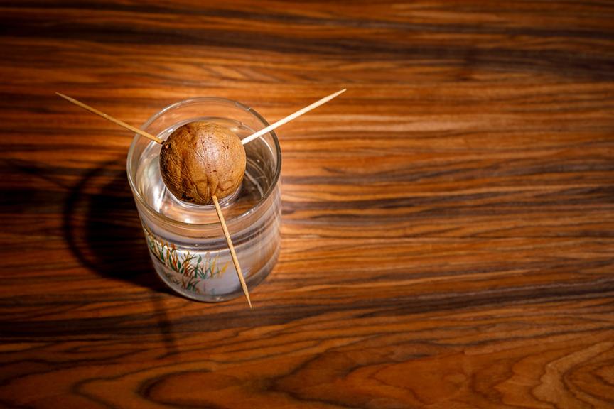 Nocciolo avocado in bicchiere con acqua e stuzzicadenti