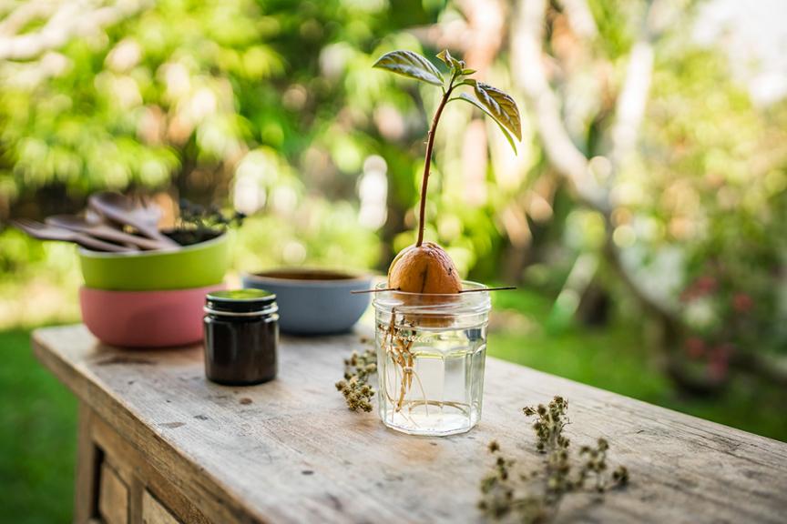 Nocciolo avocado in bicchiere con acqua in giardino su tavolo di legno